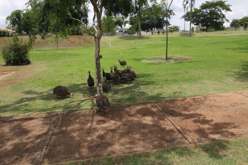 Comprar Casa / Condomínio em Ribeirão Preto apenas R$ 1.300.000,00 - Foto 38